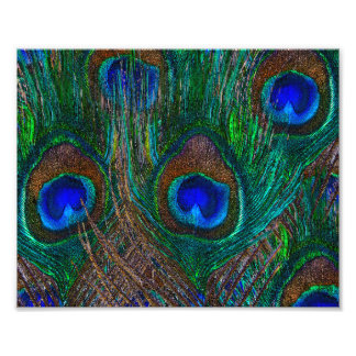Midnight Peacock Feathers Etching Style Decor Photo Print