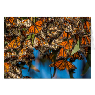 Migrating monarch butterflies cling to leaves greeting card