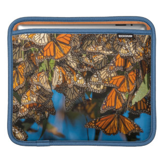 Migrating monarch butterflies cling to leaves sleeve for iPads