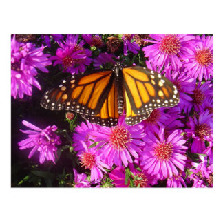 'Migrating Monarch' photo postcard