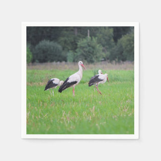 Migrating white storks, ciconia, in a meadow disposable napkin