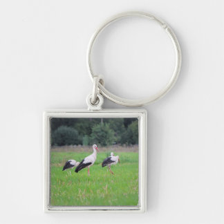 Migrating white storks, ciconia, in a meadow key ring