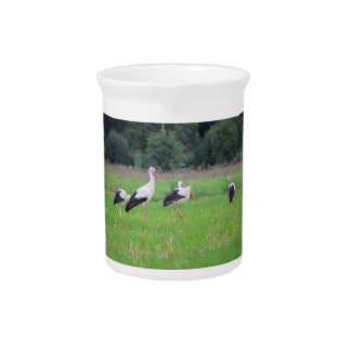 Migrating white storks, ciconia, in a meadow pitcher