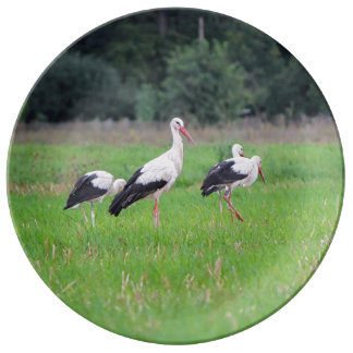 Migrating white storks, ciconia, in a meadow porcelain plates