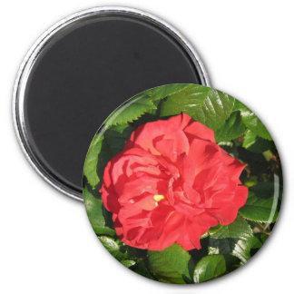 Mikado Hybrid Tea Rose 007 6 Cm Round Magnet