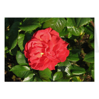 Mikado Hybrid Tea Rose 007 Greeting Card