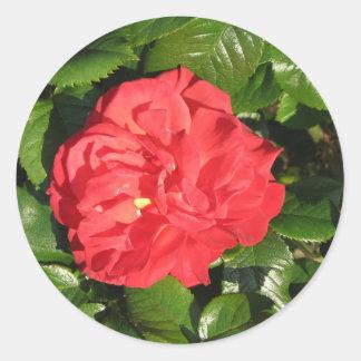 Mikado Hybrid Tea Rose 007 Round Sticker