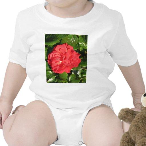 Mikado Hybrid Tea Rose 007 Tee Shirts