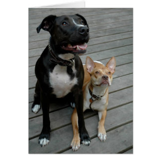 Mildred and Junebug Greeting Card