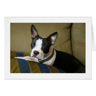 Miley the Boston Terrier Puppy Card