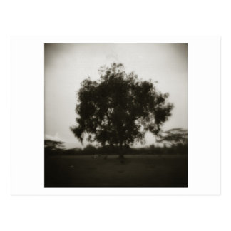 Mililani Cemetary Tree Postcard