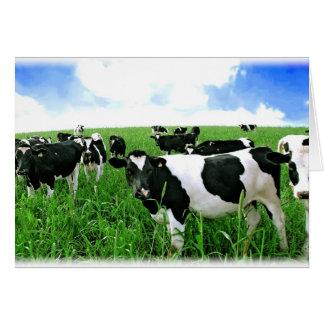 Milk Cows in Green Feild Card