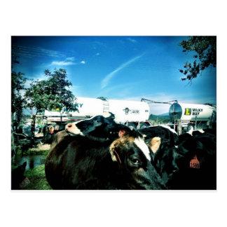 milk truck postcard