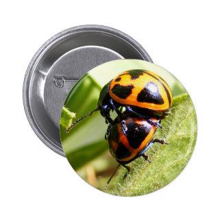 Milkweed Beetles ~ button