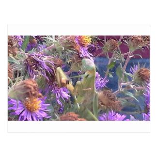 Milkweed beetles en masse exploration postcard
