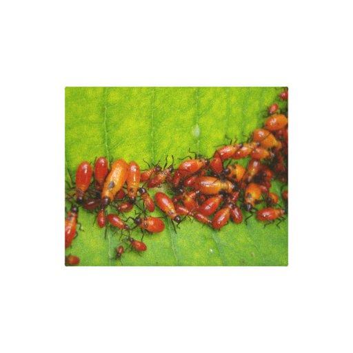 Milkweed Bugs on Milkweed Leaf Gallery Wrapped Canvas