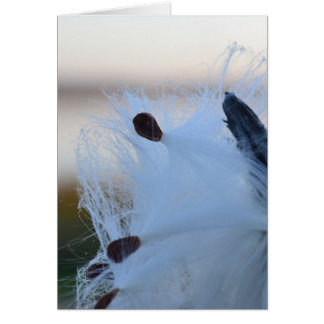 Milkweed Card