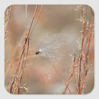 Milkweed seed and fluff square sticker