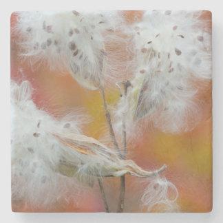 Milkweed seeds in autumn, Canada Stone Coaster