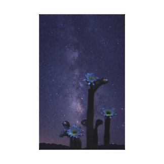 Milky Way over Cactus Flowers Canvas Print