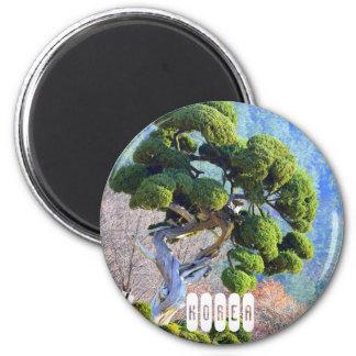 Millenium Juniper Tree in South Korea Magnet