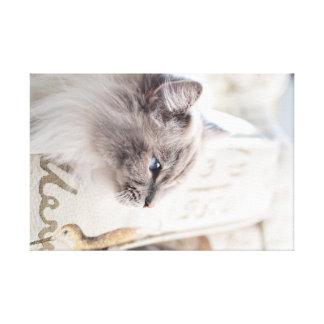Millie Ragdoll Cat Canvas Print