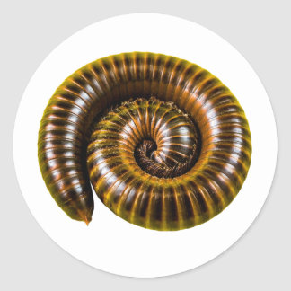 Millipede Classic Round Sticker
