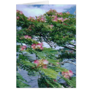 Mimosa blossoms and water view card