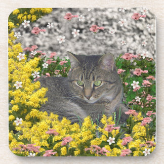 Mimosa the Tiger Cat in Mimosa Flowers Coaster