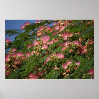 Mimosa tree poster