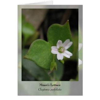 Miner's Lettuce - Native Notecard