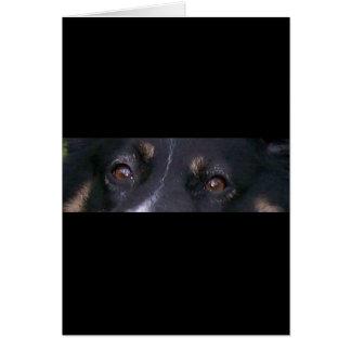 mini australian shepherd black tri eyes card