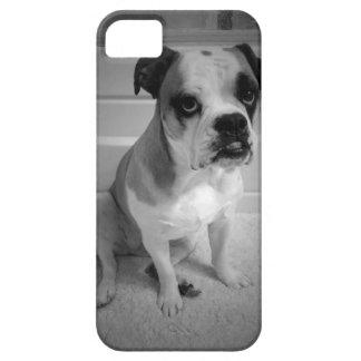 Mini Bulldog Puppy Eyes iPhone 5 Covers