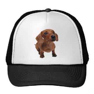 Mini Dachshund Hat