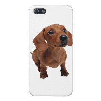Mini Dachshund iPhone 5 Cases