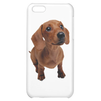 Mini Dachshund Cover For iPhone 5C