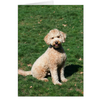 Mini Goldendoodle puppy greeting card