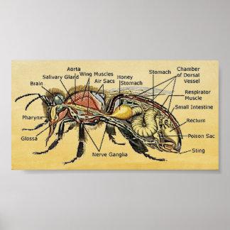 Mini Honey Bee Poster