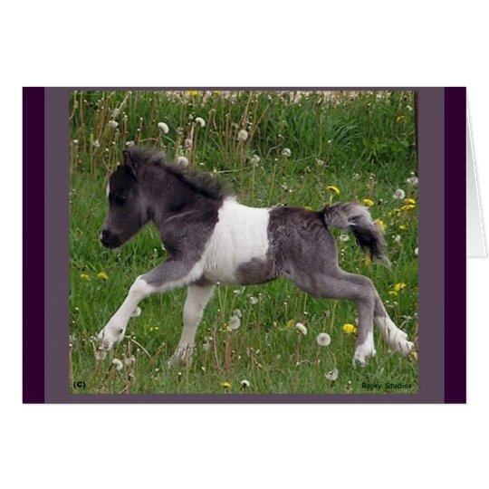 Mini Horse NoteCard