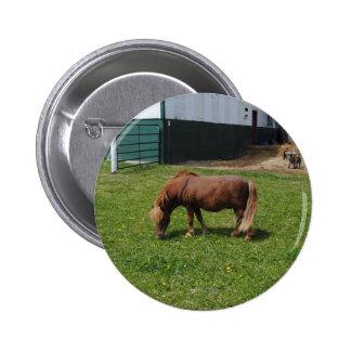 MIni Horses 6 Cm Round Badge