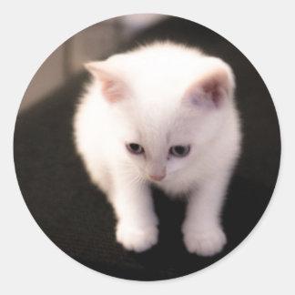 Mini kitten round sticker
