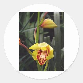 Mini Orchid Round Sticker