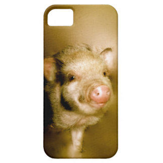 Mini pig as a baby barely there iPhone 5 case