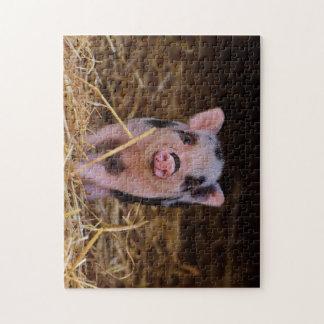 mini pig jigsaw puzzle