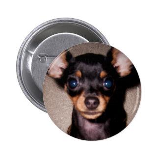 mini pinscher. 6 cm round badge
