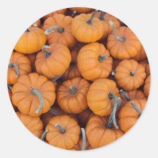 Mini Pumpkins Stickers