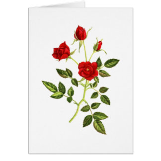 Mini Red Rose Note Card