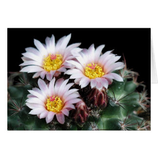 Miniature Barrel Cactus Bloom and Facts Card