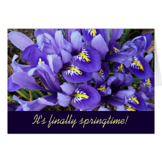 Miniature Blue Irises Spring Card (Blank Inside)
