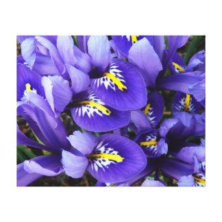 Miniature Blue Irises Spring Floral Stretched Canvas Print